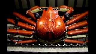 The Founder of the Chain Crab Restaurant - Tatsuro Hioki