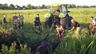 Brandweer en boer redden paard uit sloot in Eemdijk