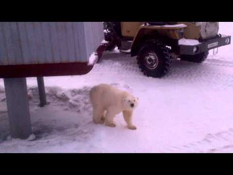 Царь медведей (ч1)