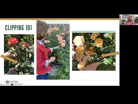 Learn by Doing at Home, Session 2: Foraging, Floral Arranging and Everyday Entertaining