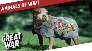 Nonton Companions In The Trenches - Animals of World War 1 Film Subtitle Indonesia Streaming Movie Download