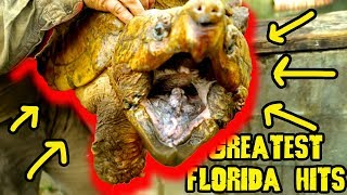 Florida Snapping Greatest Gator Hits Throwback Thursday by Prehistoric Pets TV
