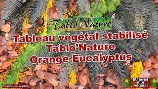 Tableau végétal stabilisé Tablo'Nature Orange Eucalyptus