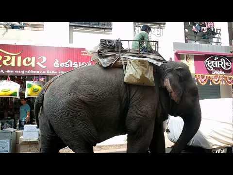 Elephant journey II Lord Ganesha blessing by elephant