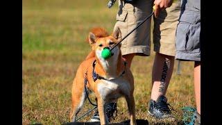 Soigner son chien sans stress avec le Medical Training