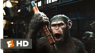 Nonton Rise of the Planet of the Apes (2011) - Prison Break Scene (2/5) | Movieclips Film Subtitle Indonesia Streaming Movie Download
