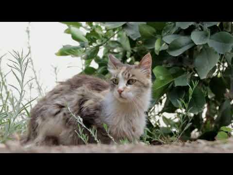 Sonido para Llamar la Atención de los Gatos 🐱🐈 Atraer Felinos