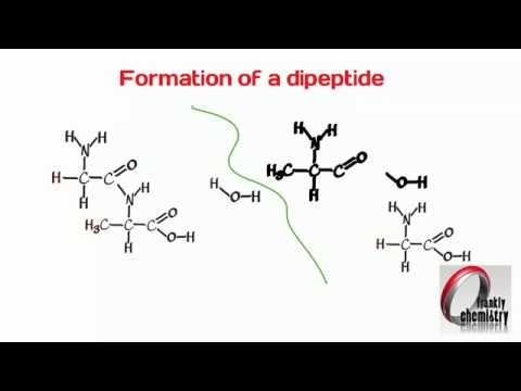 Amino Acids 4. Formation of a Dipeptide.