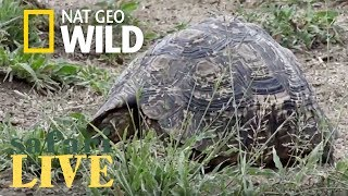 Safari Live - Day 117 | Nat Geo Wild by Nat Geo WILD