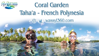 Tahaa French Polynesia  City pictures : Coral Garden Snorkeling - Amazing Underwater World - Tahaa - French Polynesia - HD