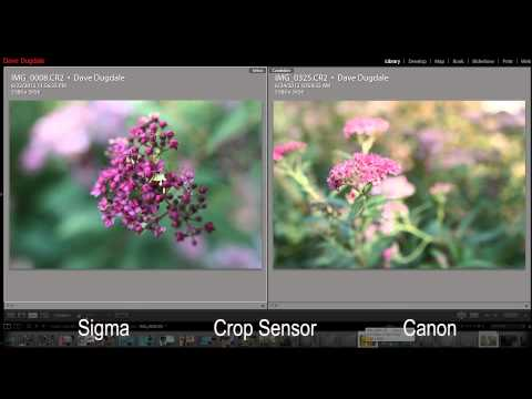 f1.4 - http://www.dslrfilmnoob.com I got together with Dave Dugdale a few weeks ago to work on this comparison video matching up the Canon 24mm f1.4 mark II and the...