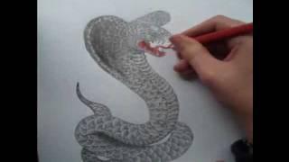 Cobra Drawing Timelapse