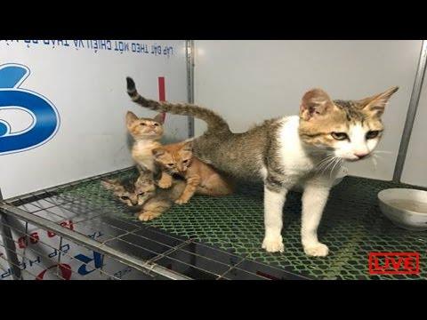 Kitten live-stream So Cute!