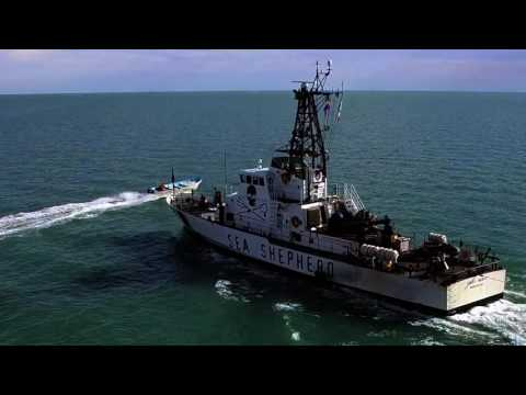 Sea Shepherd vs Poachers in the Gulf of California