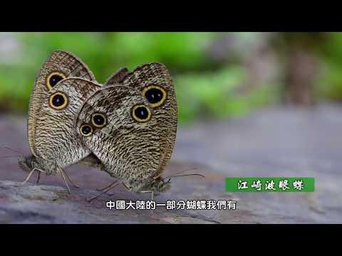 生態寫日記 施信峰