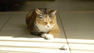 Raidījumā: – Iemidziniet manu suni, viņš sagrauza kurpes! Vetārsts Aigars Briņķis atklāj, ka reizēm dzīvniekus nākas glābt nevis...