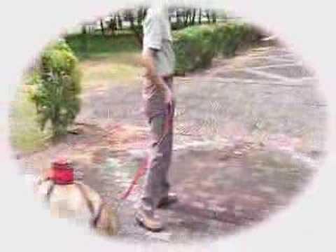 Japoński wynalazek: torebka na kupę psa