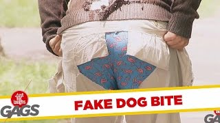 Puppy Attack !, Just for laughs, Just for laughs gags, Just for laughs 2015