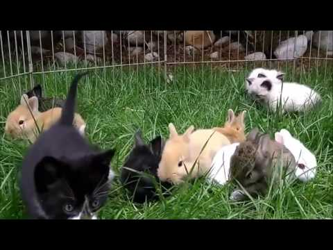 Adorable Fluffy Kittens and Bunnies Playing Together