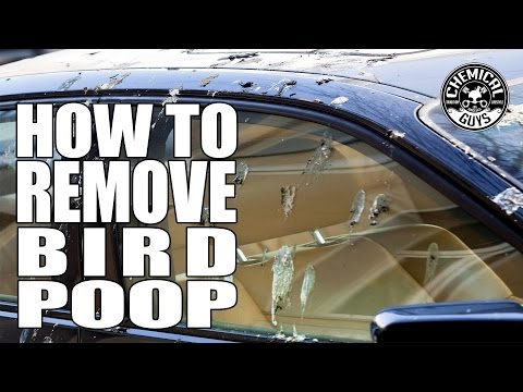 How To Remove Bird Poop – Chemical Guys Car Care