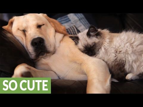 cane-e-gatto-dormono-insieme-sul-divano