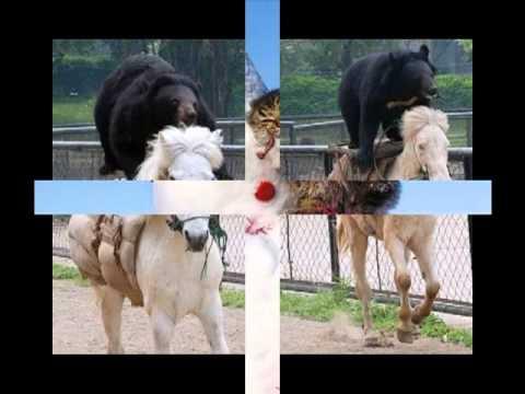 Ржачные видео приколы про животных