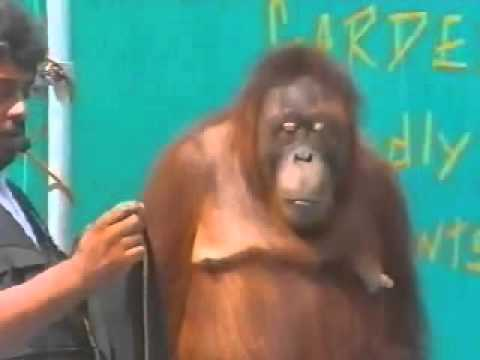 hài Hài hước với động vật6