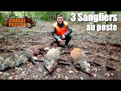 chasse - Chasse Passion est de retour dans une magnifique battue aux sangliers. J'aurai la chance de prélever 3 sangliers au cours de cette journnée de chasse. Bonne vidéo à tous et merci pour les...