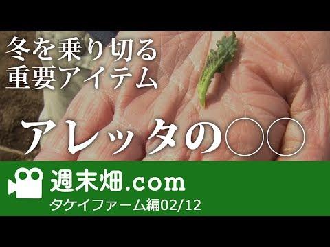 アレッタの収穫 タケイファーム編02 #12 【週末畑.com】
