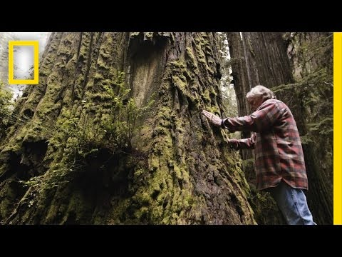 One Man's Mission to Revive the Last Redwood Forests | Short Film Showcase