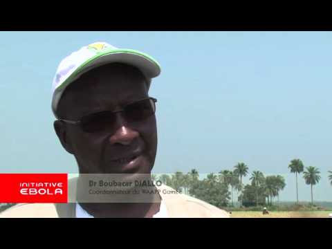 Reviving agriculture in Guinea after Ebola