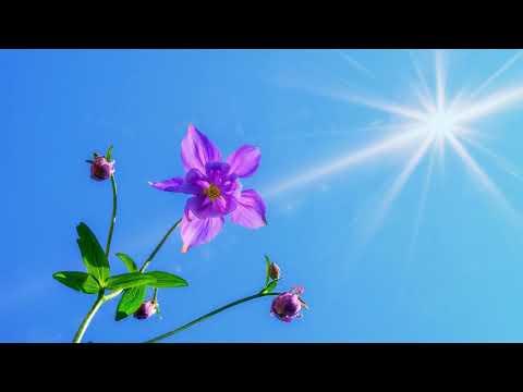 In Memory Of Michael Rehulka....Best Of (Melodic Progressive Mix)