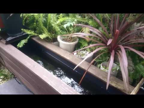 鯉と金魚とコメットの池
