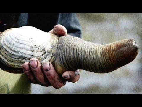10 бессмертных животных. Почти