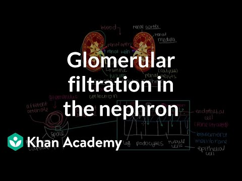 Glomerular filtration in the nephron | Renal system physiology | NCLEX-RN | Khan Academy