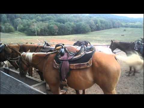 Rock Climbing Wall & Horse Riding at JesseJames in Kentucky