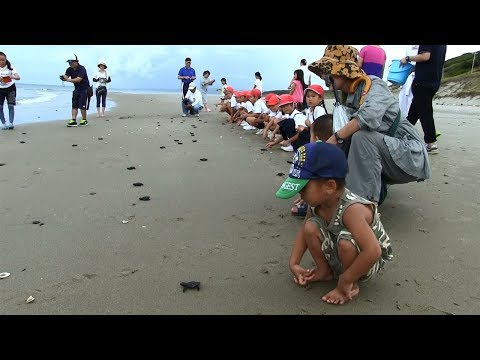 種子島の学校活動:岩岡小学校長浜海岸でウミガメ放流体験2017年