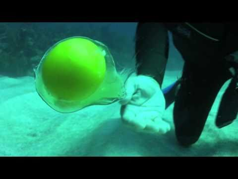 What happens when you crack an egg underwater