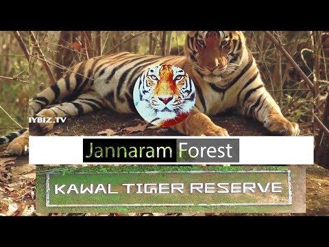 Telangana Jannaram Forest Kawal Tiger Reserve