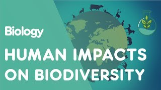 Biodiversity is the variety of life.There are thought to be 8.7 million species on planet Earth. And, as we saw in this video, biodiversity is of utmost importance to humans.The loss of one key species can have a detrimental impact on many levels; from other species of animals to plants to the physical environment, as shown by wolves.Human activities are reducing biodiversity. Our future depends upon maintaining a good level of biodiversity, and so we need to start taking measures to try and stop the reduction.In this video we are going to look at how humans are negatively impacting biodiversity.As the world population has grown from 1.5 billion in 1900 to nearly 7.5 billion people today, unsurprisingly the land use has changed.Habitats have been destroyed in favour of agriculture, forestry, fishing, urbanisation and manufacturing. Unsurprisingly, habitat loss has greatly reduced the species richness. Habitat fragmentation has also meant that populations have been split into smaller subunits, which then when faced with challenging circumstances have not been able to adapt and survive.After habitat loss, overharvesting has had a huge effect on biodiversity. Humans historically exploit plant and animal species for short-term profit. If a resource is profitable, we develop more efficient methods of harvesting it, inevitably depleting the resource. As is currently happening with fishing and logging. The exploited species then needs protection. The difficulty is that the demand then outstrips the supply, and so the resource value rises. This increases the incentive to extract the resource and leads to the final collapse of the population. As happened with whales, elephants, spotted cats, cod, tuna and many more species.Human activities are polluting the air and water. Toxic discharge into the water from industrial processes unsurprisingly has a negative effect on the local aquatic species by killing, weakening or affecting their ability to reproduce.Phosphorous and nitrogen in fertilisers run-off agricultural fields and pass into rivers. These surplus nutrients cause algae to bloom, which then starves other aquatic species of oxygen and light, causing them to die.Acid rain is one consequence of humans polluting the air. This causes lakes and water bodies to become more acidic, killing off fish, molluscs, amphibians and many other species.Huge impact humans have had on planet Earth is the introduction of alien species to habitats. In fact, it is estimated that on any given day there are 3000 species in transit aboard ocean-going vessels!Alien species can cause problems in a number of ways… pause the video and have a look.Throughout the earth's history there have been periods of rapid climate change, that have led to mass extinction events. We are currently in a period of fluctuating climate, but nearly all scientists agree that human activities, like burning fossil fuels, are speeding up global warming.We don't know how much climate change is going to affect biodiversity in future, but it's predicted to be huge. Loss of sea ice and ocean acidification are already causing huge reductions in biodiversity. Climate change alters temperature and weather patterns, with changing patterns of rainfall and drought expected to have significant impacts on biodiversity.So there we have a selection of human-related impacts on biodiversity. There are much more, which a quick search on the internet will bring up.SUBSCRIBE to the FuseSchool YouTube channel for many more educational videos. Our teachers and animators come together to make fun & easy-to-understand videos in Chemistry, Biology, Physics, Maths & ICT.VISIT us at www.fuseschool.org, where all of our videos are carefully organised into topics and specific orders, and to see what else we have on offer. Comment, like and share with other learners. You can both ask and answer questions, and teachers will get back to you.These videos can be used in a flipped classroom model or as a revision aid. Find all of our Chemistry videos here:https://www.youtube.com/watch?v=cRnpKjHpFyg&list=PLW0gavSzhMlReKGMVfUt6YuNQsO0bqSMV Find all of our Biology videos here: https://www.youtube.com/watch?v=tjkHzEVcyrE&list=PLW0gavSzhMlQYSpKryVcEr3ERup5SxHl0 Find all of our Maths videos here:https://www.youtube.com/watch?v=hJq_cdz_L00&list=PLW0gavSzhMlTyWKCgW1616v3fIywogoZQ Twitter: https://twitter.com/fuseSchoolAccess a deeper Learning Experience in the FuseSchool platform and app: www.fuseschool.orgFollow us: http://www.youtube.com/fuseschoolFriend us: http://www.facebook.com/fuseschoolThis Open Educational Resource is free of charge, under a Creative Commons License: Attribution-NonCommercial CC BY-NC ( View License Deed: http://creativecommons.org/licenses/by-nc/4.0/ ).  You are allowed to download the video for nonprofit, educational use. If you would like to modify the video, please contact us: info@fuseschool.org