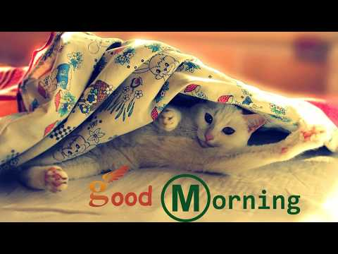 Good morning SMS - Good Morning 2017- Whatsapp Status Video, Message, Quotes, SMS, Greetings, eCard, Wishes, Images