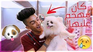 Video قررت اشتري كلب سعره 15,000 الف ريال !!! MP3, 3GP, MP4, WEBM, AVI, FLV Juni 2018