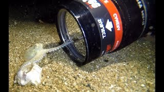 Video Baby Octopus Discovers Camera MP3, 3GP, MP4, WEBM, AVI, FLV Agustus 2018
