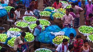 Bangladesh's Organic Mangoes