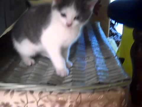 Kitty when he was a kitty. (видео)