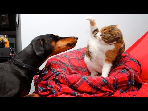 Funny Cats And Dogs Part 5 - Funny Cats Vs Dogs - Funny Animals Compilation
