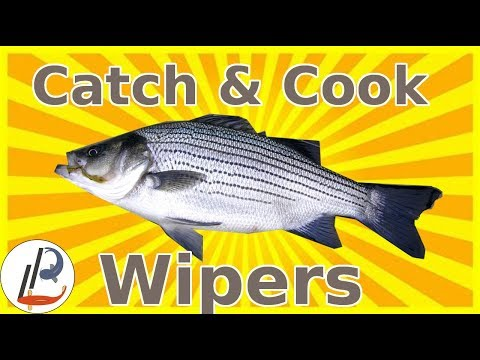 How To Catch And Cook Wiper Bass