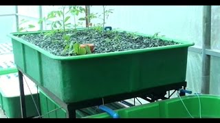Narra Philippines  city photo : How the Aquaponics in Narra Hill works, MADE in the Philippines