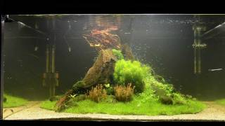 """Video Aquascape Tutorial """"Nature's Chaos"""" by James Findley - The Making Of MP3, 3GP, MP4, WEBM, AVI, FLV Agustus 2019"""