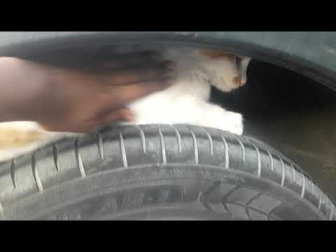 Cat In Tire